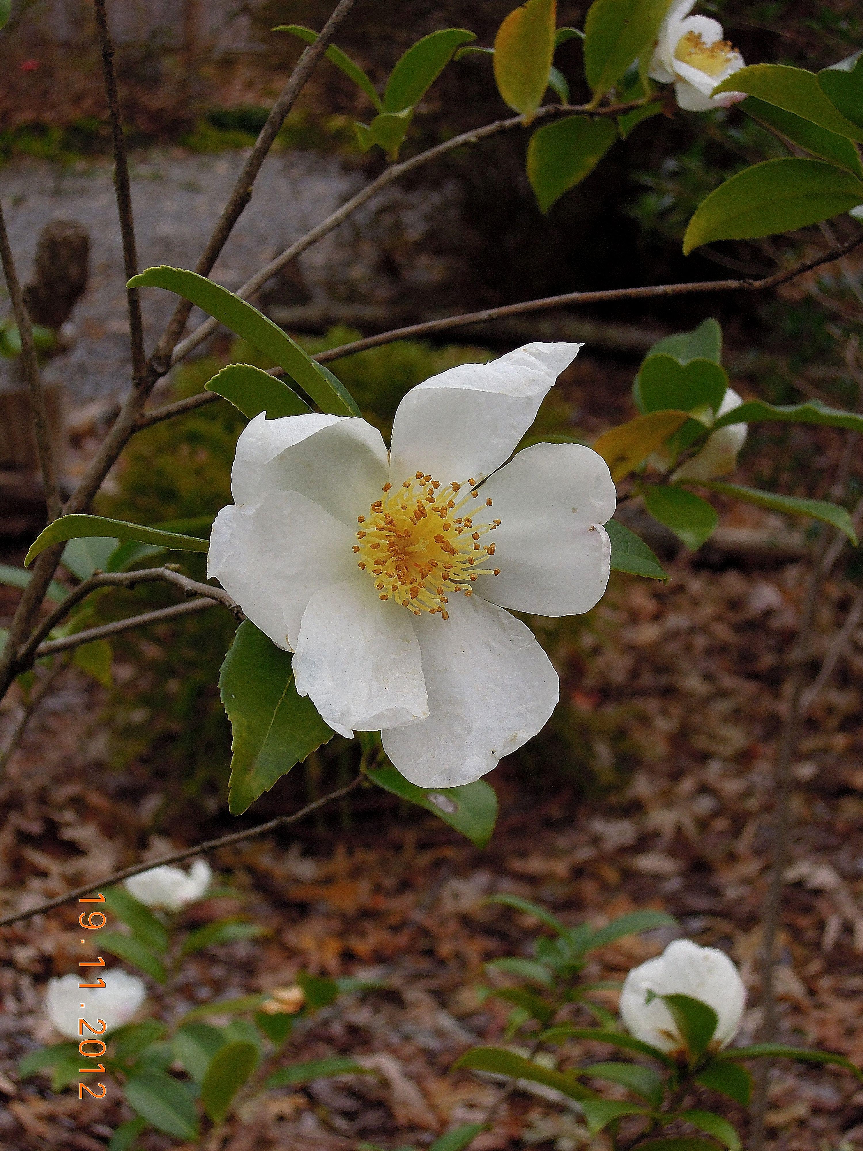 2012 | floragloria